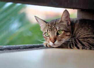 karma dla kotów sterylizowanych